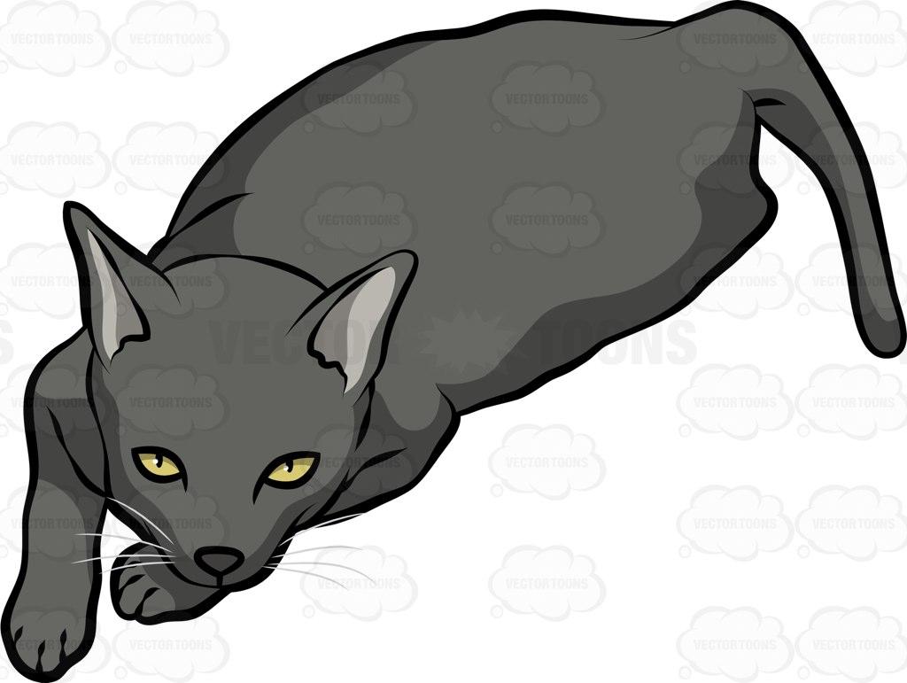 Sam Sawet Cat: Sam A Sam Sawet Cat Breed