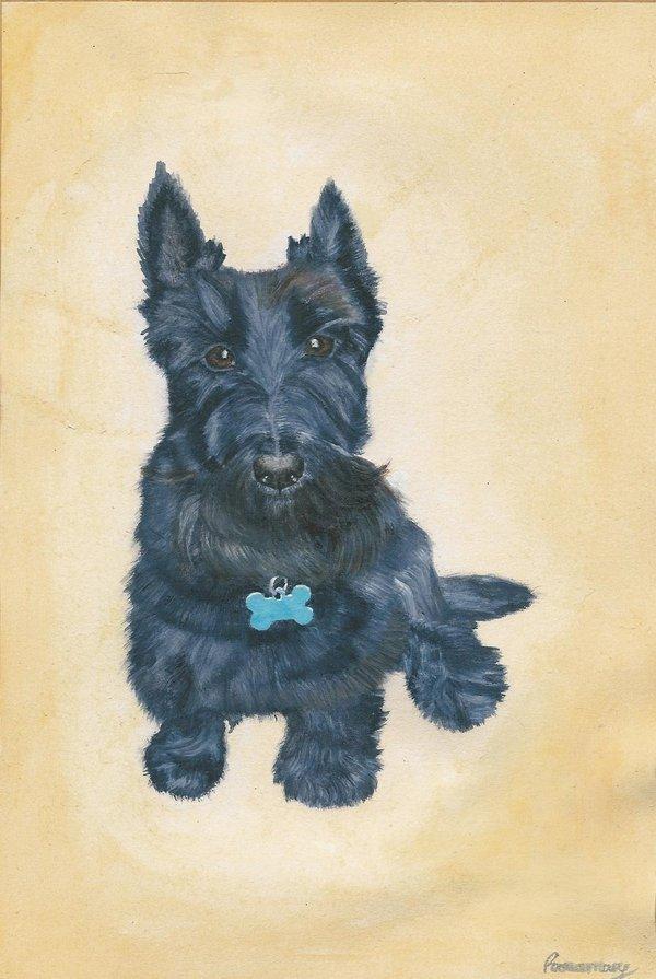 Scottish Terrier Dog: Scottish Scottish Terrier Fanart Breed