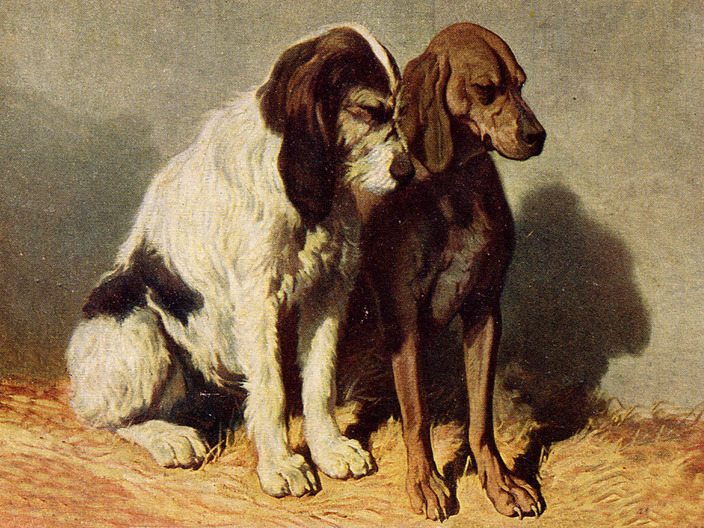 Segugio Italiano Dog: Segugio Breed