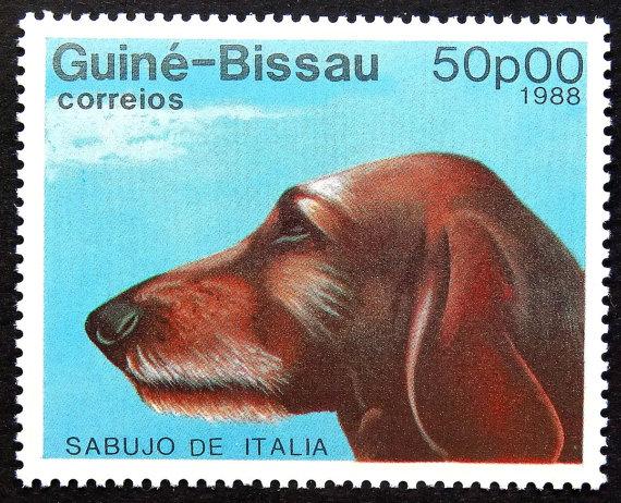 Segugio Italiano Dog: Segugio Segugio Italiano Sabujo De Italia Dog Breed