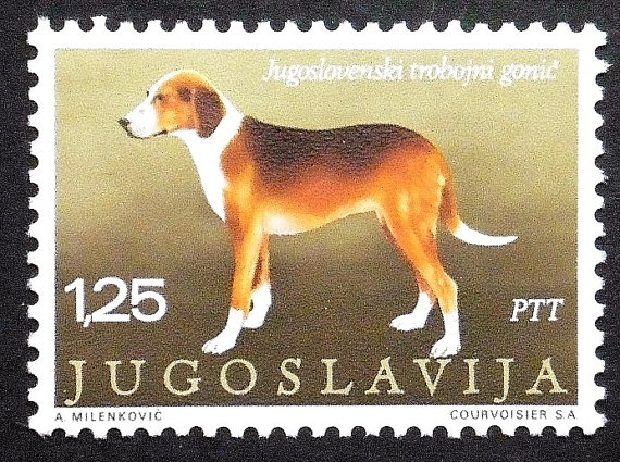 Serbian Hound Dog: Serbian Serbian Tricolour Hound Dog Breed