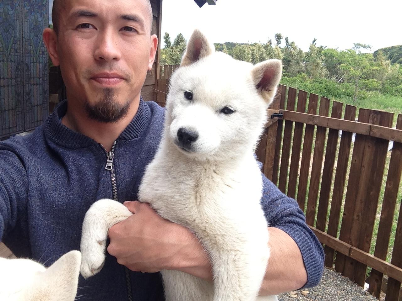 Shikoku Ken Puppies: Shikoku A Gaggle Of Hokkaido Puppies Breed