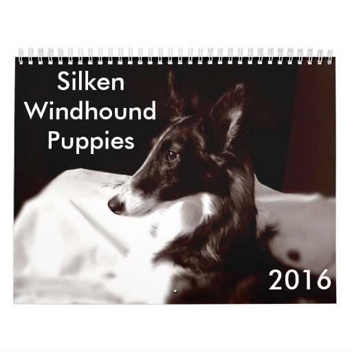 Silken Windhound Puppies: Silken Silkenwindhoundpuppiescalendar Breed