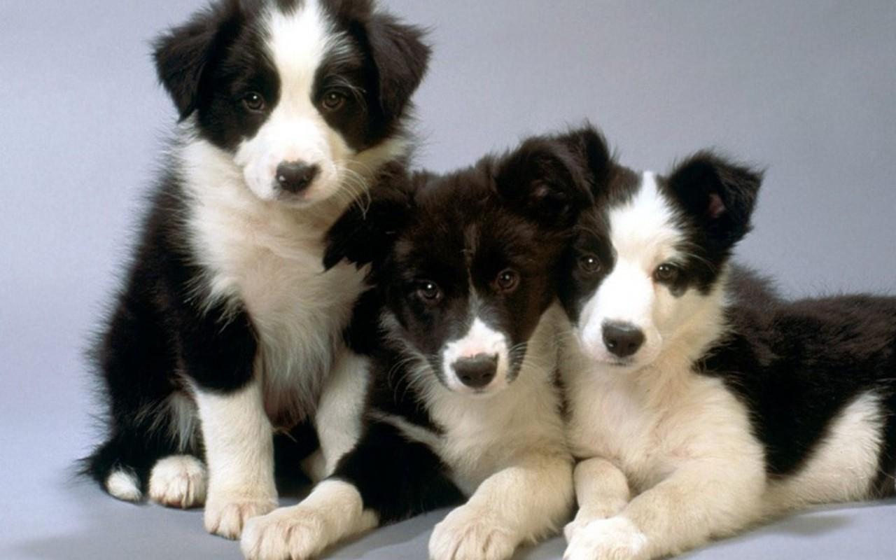 Small Greek Domestic Puppies: Small Cute Puppies Breed