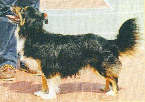 Small Greek Domestic Dog: Small Dogsix Breed