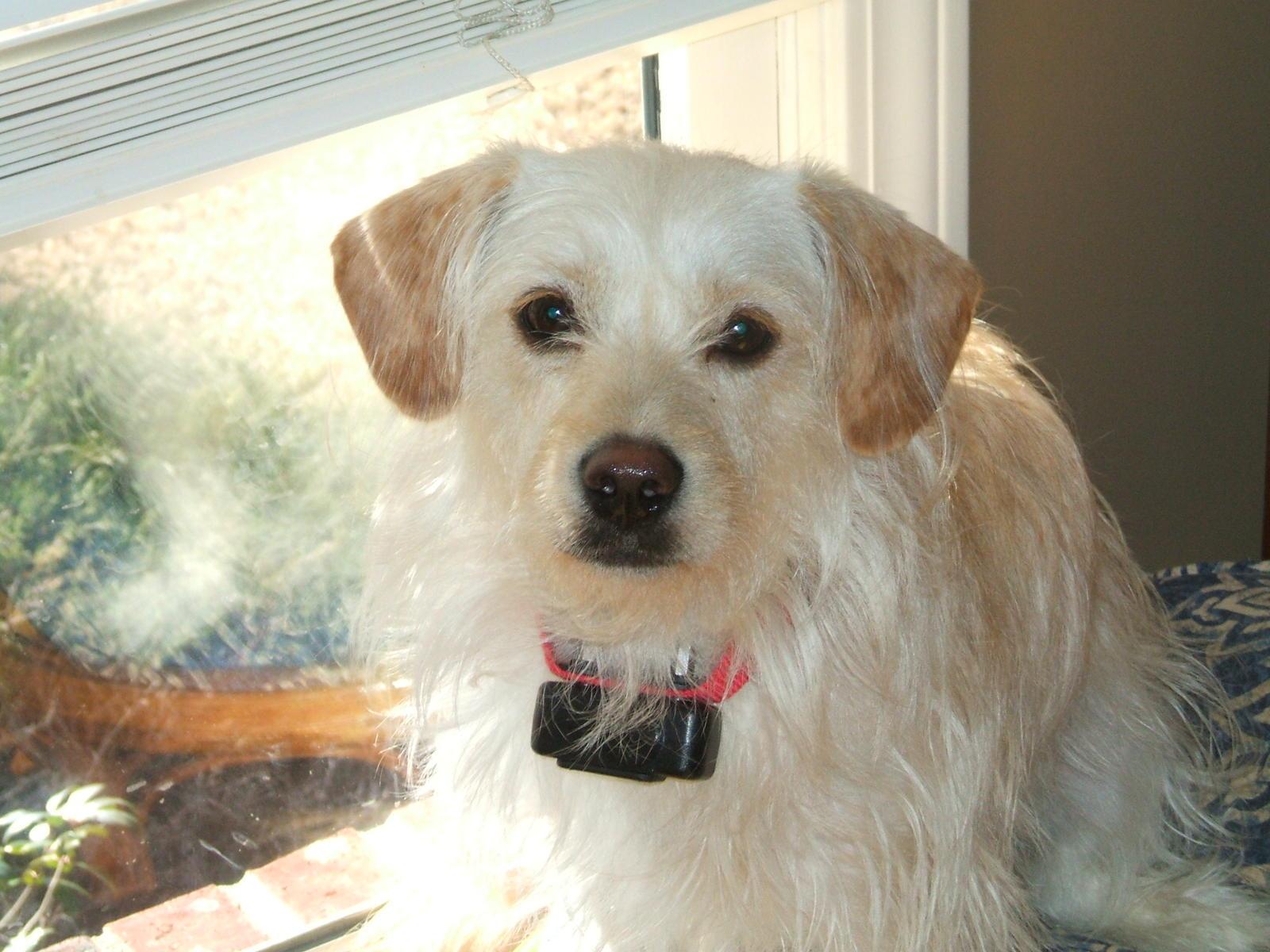 Small Greek Domestic Puppies: Small Mutt Dog Breed