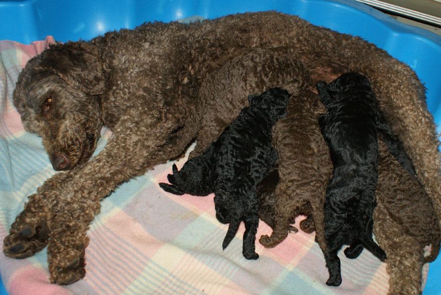 Small Greek Domestic Puppies: Small Sweetdreamsfuelsugarwiki Breed