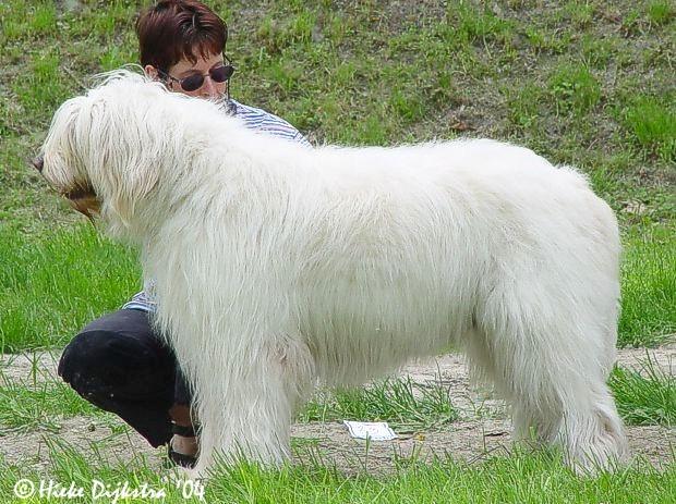 South Russian Ovcharka Dog: South Os Caes Mais Raros Do Mundo I Breed