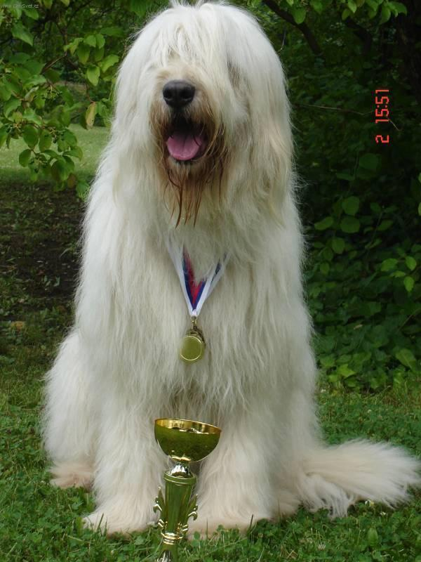 South Russian Ovcharka Dog: South S Breed