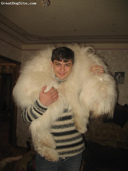 South Russian Ovcharka Puppies: South South Russian Ovtcharka Dog Breeds A Z