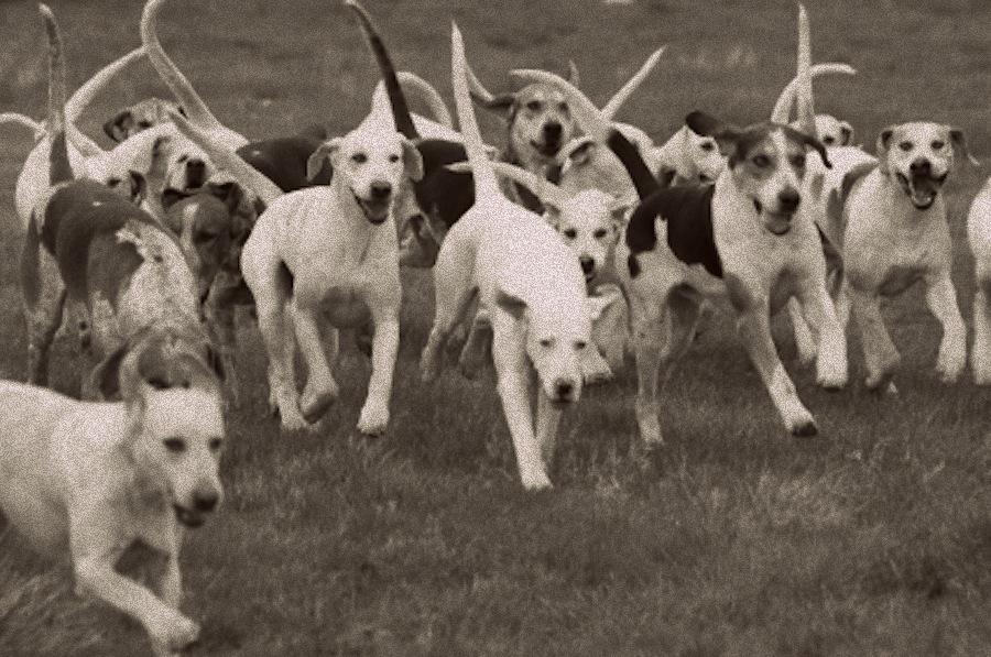 Southern Hound Dog: Southern Southern Hound Breed