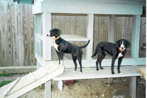 Stephens Cur Puppies: Stephens Mountain Kerr Dog Breed