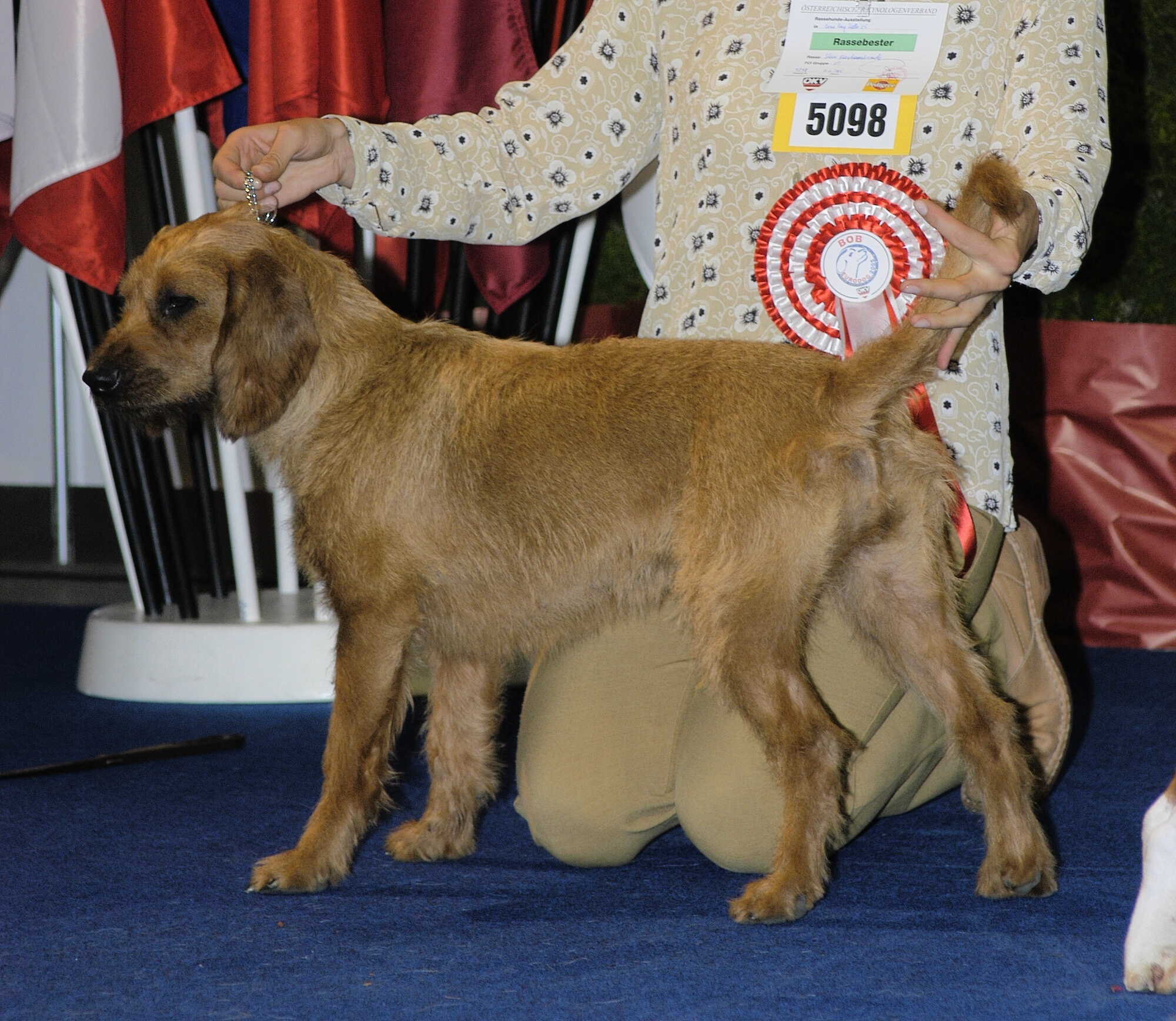 Styrian Coarse-haired Hound Dog: Styrian Coarse Haired Styrian Hound Breed