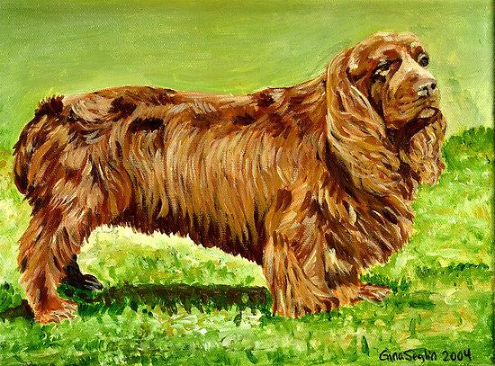 Sussex Spaniel Dog: Sussex Sussex Spaniel Dog Portrait Breed