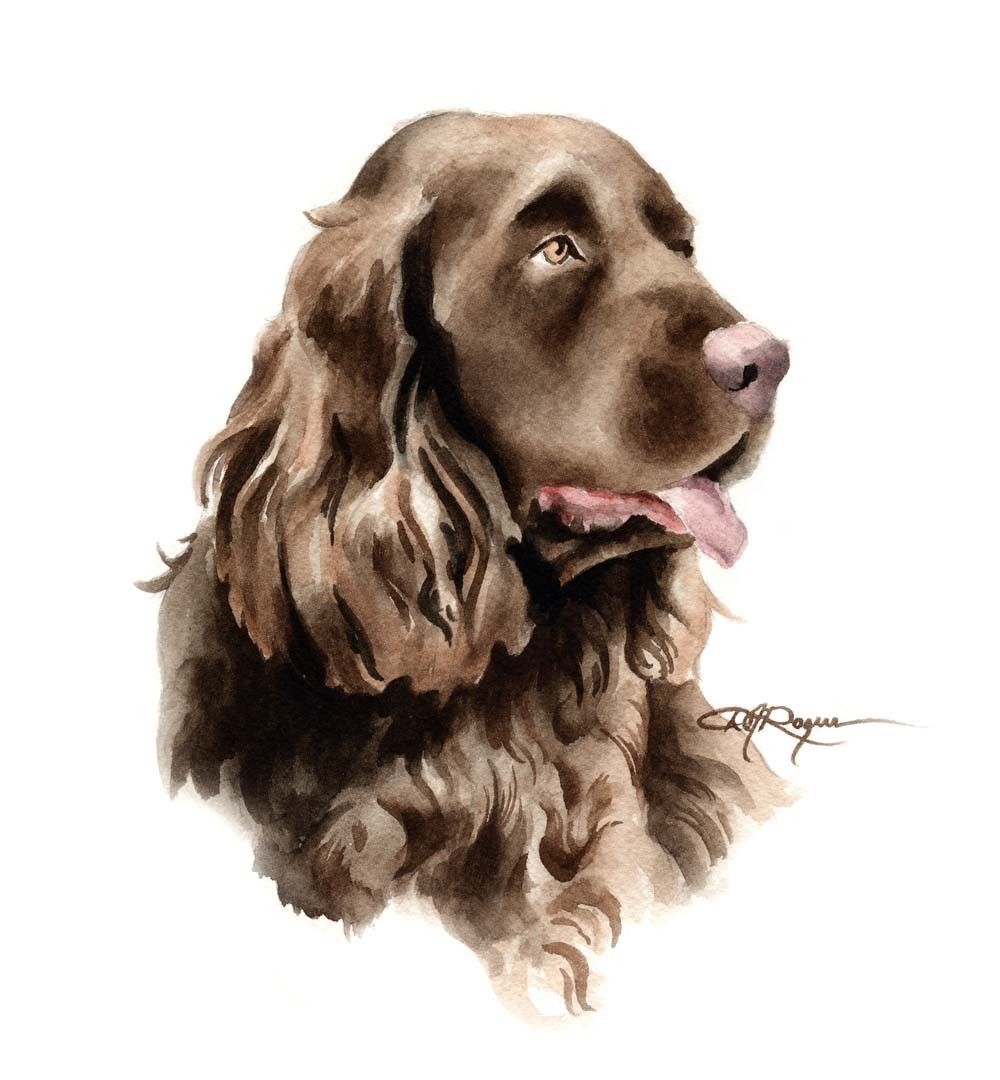 Sussex Spaniel Dog: Sussex Sussex Spaniel Dog Watercolor Painting Breed