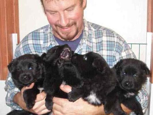 Swedish Lapphund Puppies: Swedish Henrikpuppies Breed
