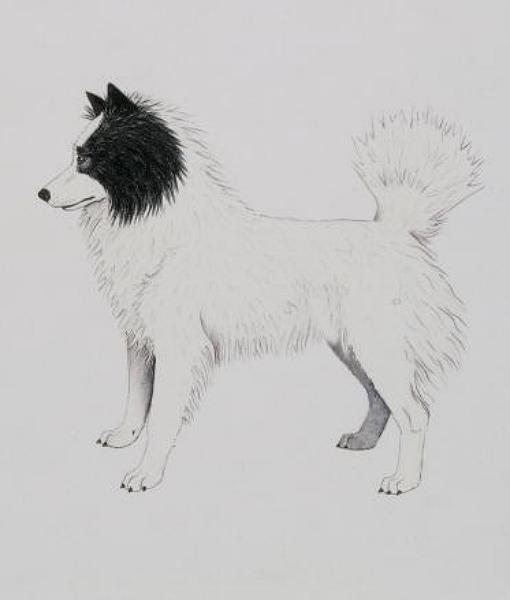 Tahltan Bear Dog: Tahltan Racas De Cachorros Extintos Breed
