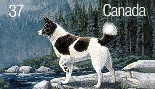 Tahltan Bear Dog: Tahltan The Dogs Of Canadian History Breed