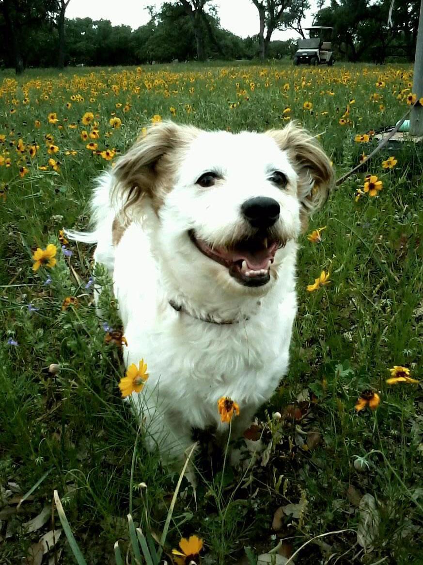 Talbot Dog: Talbot Breed