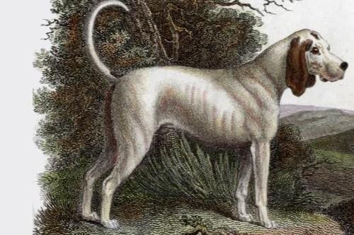Talbot Dog: Talbot Extinct Breeds Of Dogs