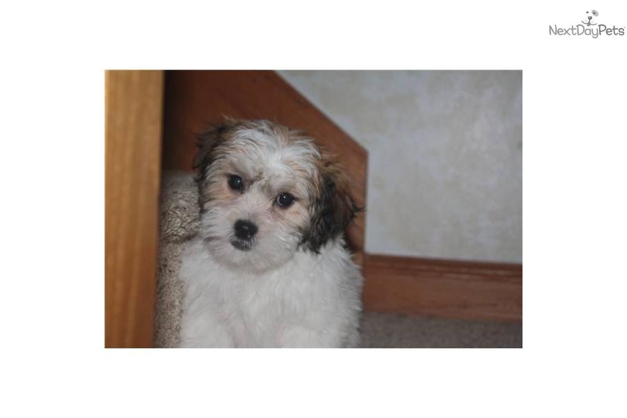Talbot Puppies: Talbot Fdbd Df Breed