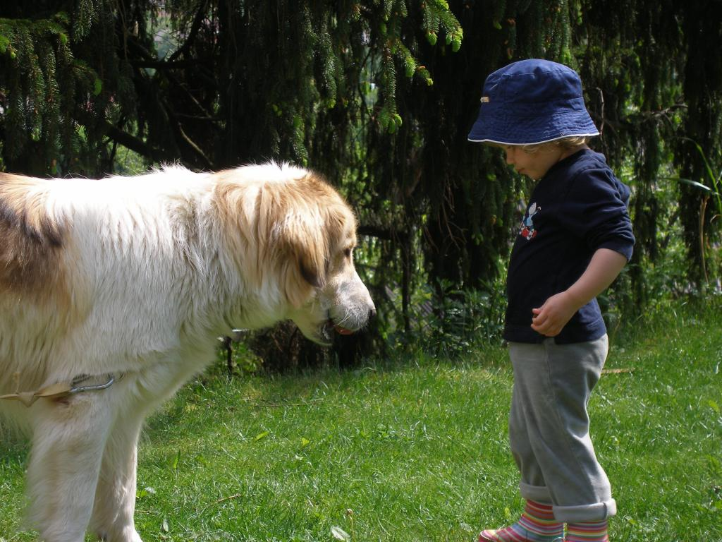 Tornjak Dog: Tornjak Tornjak And Children Breed