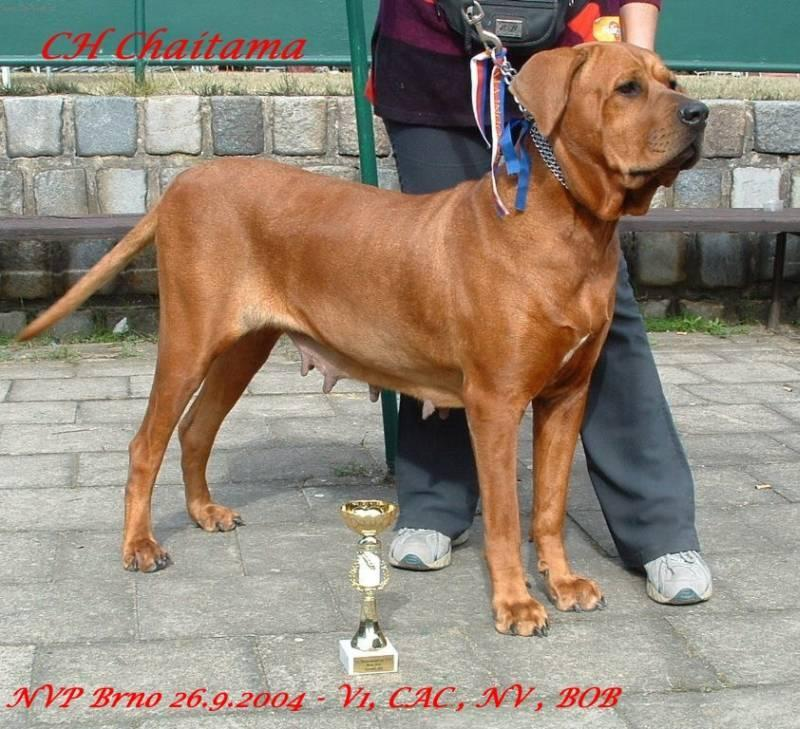 Tosa Dog: Tosa Tosa Inu Dog Breed