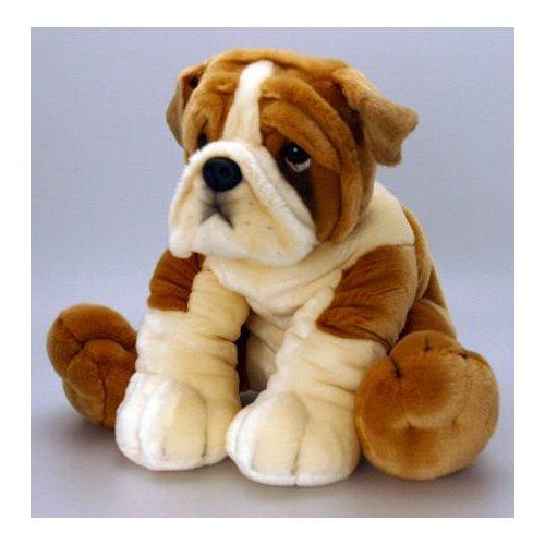 Toy Bulldog Dog: Toy Bgoc Breed