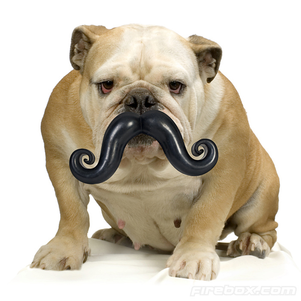 Toy Bulldog Dog: Toy Giant Mustache Chew Toy Makes Your Dog Look Dignified Breed