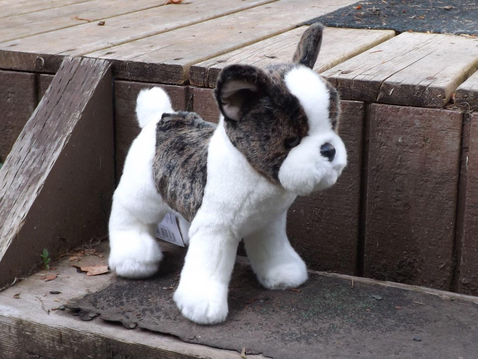Toy Bulldog Dog: Toy Stuffed French Bulldog D Breed