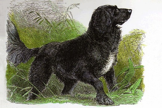 Tweed Water Spaniel Dog: Tweed Dog Breeds Come And Go