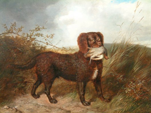 Tweed Water Spaniel Dog: Tweed Koirien Historia Breed