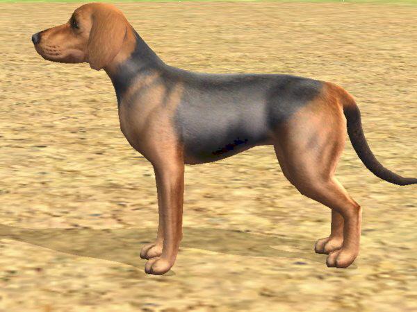Vanjari Hound Puppies: Vanjari Picture Of Array Irish Wolfhound Dog S Irish Wolfhound Dog Pictures Breed