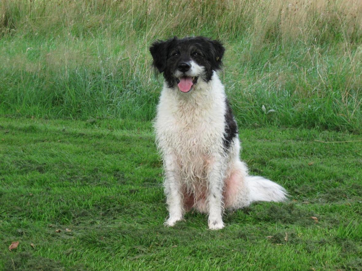 Wetterhoun Dog: Wetterhoun Wetterhoun Dog Breed